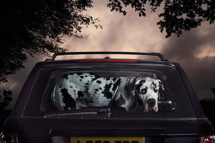2-Martin-Usborne-The-Silence-Of-Dogs-In-Cars-pulp-collectors