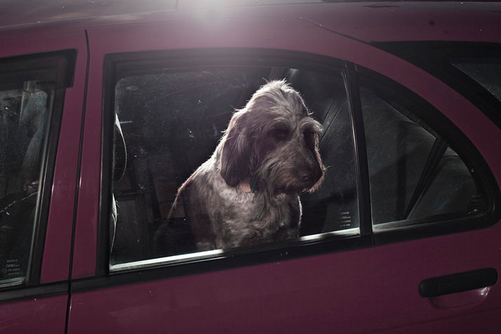 4-Martin-Usborne-The-Silence-Of-Dogs-In-Cars-pulp-collectors