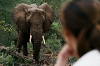 elephants south africa, elephant, safari, wildlife, incredible elephant, jungle book in south africa