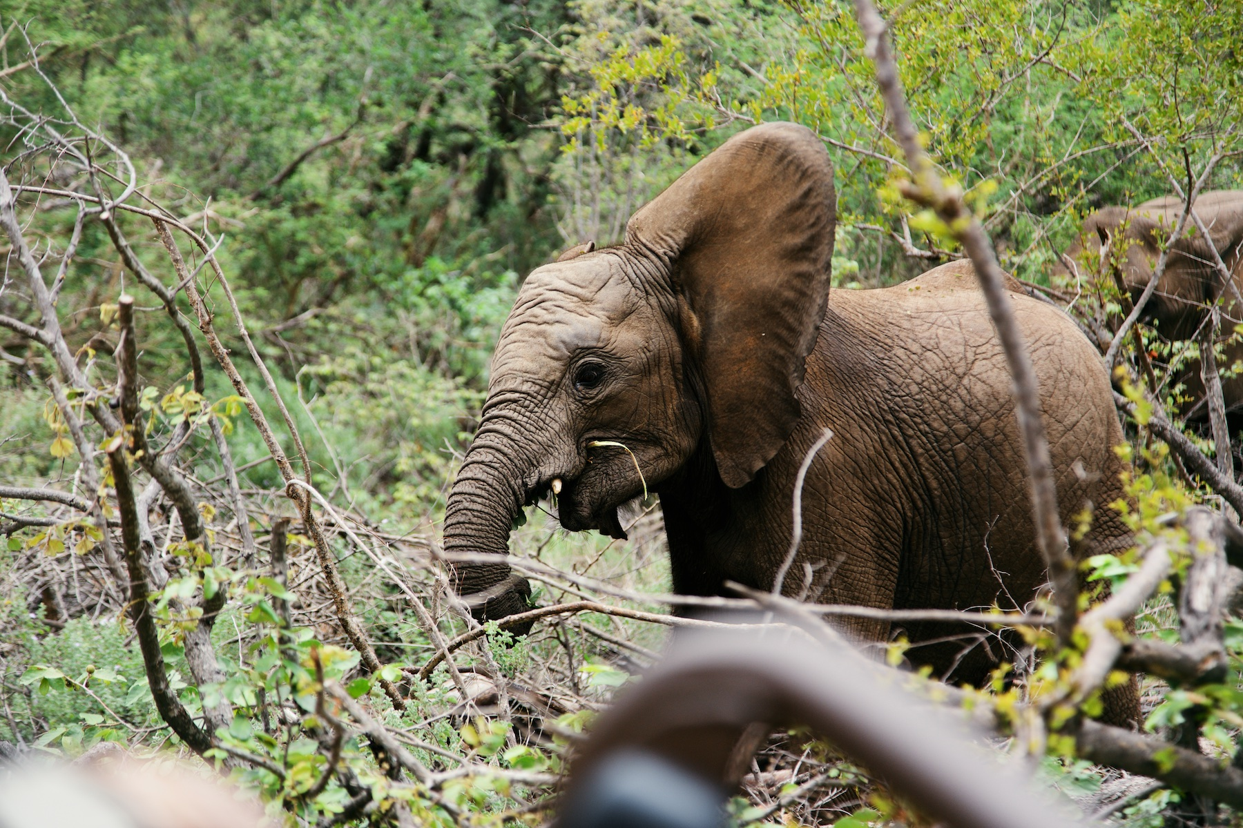 Baby elephant a few meters away... how cute!